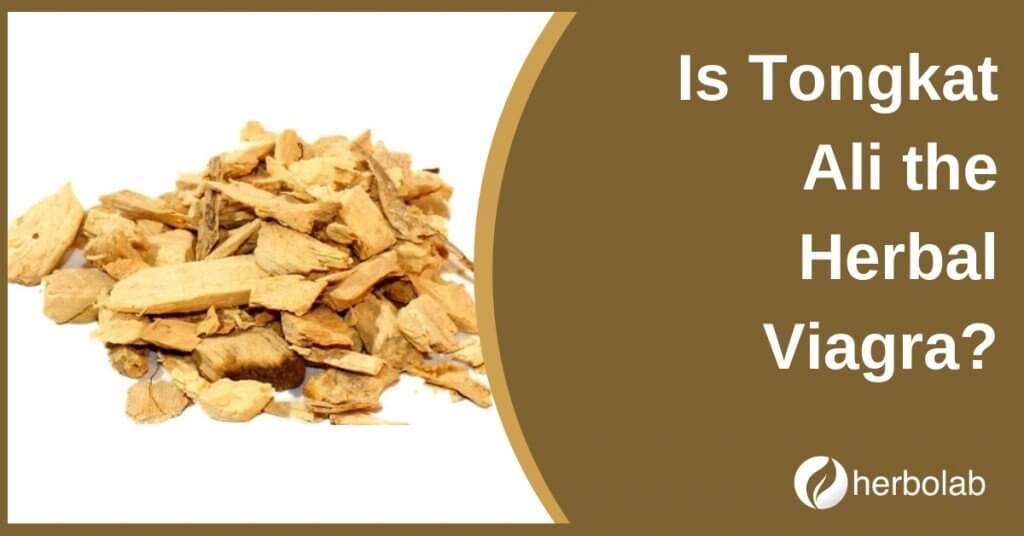 Is Tongkat Ali the Herbal Viagra?