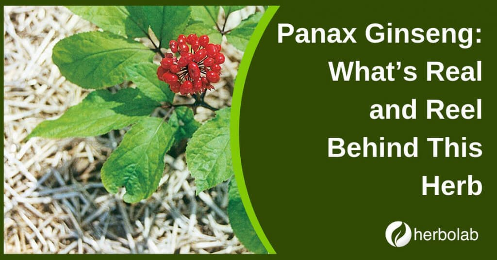 Panax Ginseng: What's Real and Reel Behind This Herb