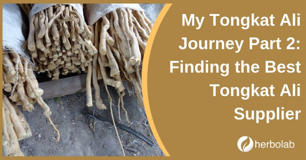 My Tongkat Ali Journey Part 2: Finding the Best Tongkat Ali Supplier