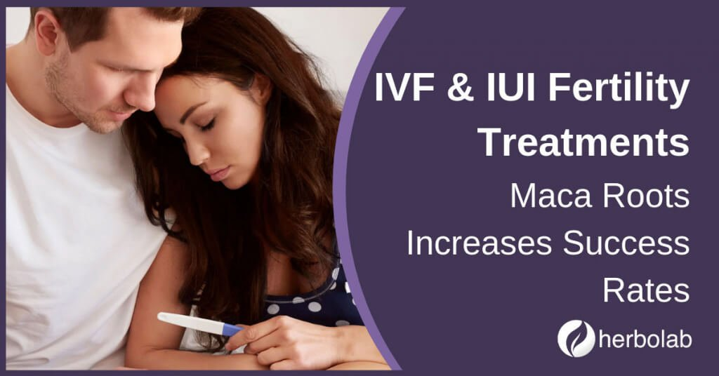 IVF & IUI Fertility Treatments: Maca Roots Increases Success