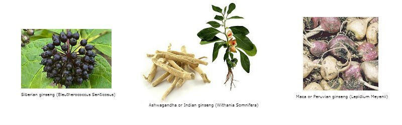 Other Plants Known as Ginseng