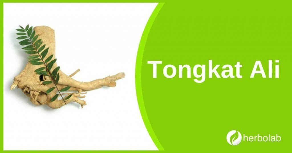 tongkat-ali-supplement