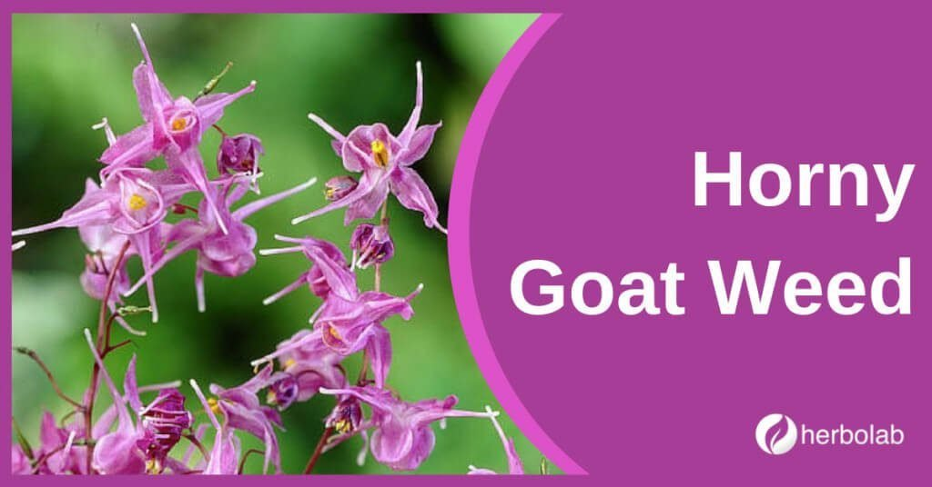 horny-goat-weed-supplement