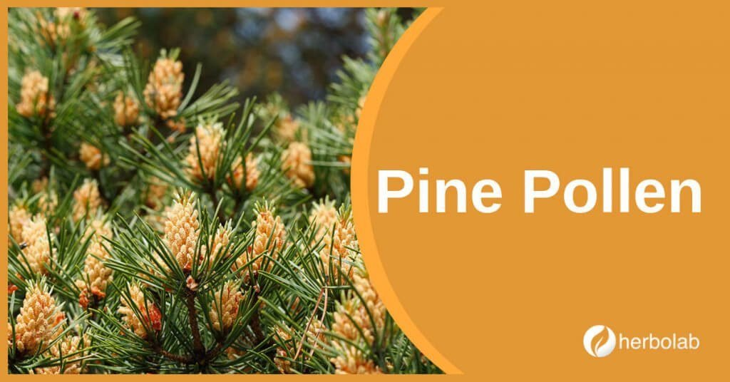 pine-pollen-supplement