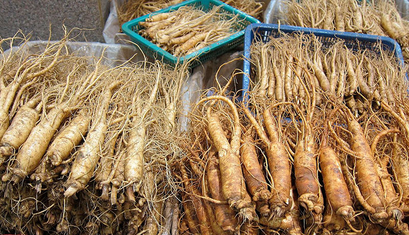 red korean ginseng roots